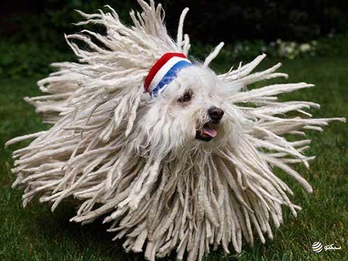 Beast سگ مارک زاکربرگ